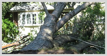 Top-Rated Tree Removal Services